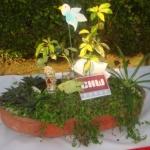 DSC00336 - CHW Flower Show
