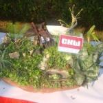 DSC00337 - CHW Flower Show